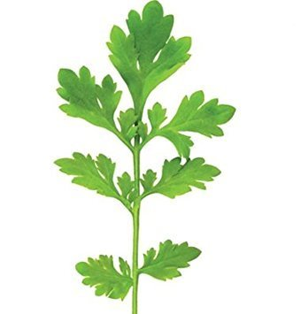 David's Garden Seeds Cress Cressida D382 (Green) 1000 Organic Seeds