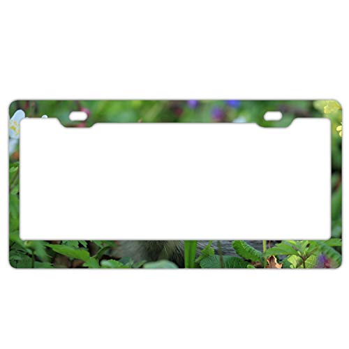 Zogpemsy License Plate Covers Urchin Spines Grass Flowers Steel Metal License Plate Frame Style