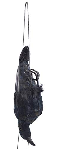 17 inch Realistic Hanging Dead Crows Decoy Lifesize Extra Large Black Feathered Scare Deterrent ()