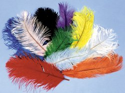 Costumes For All Occasions Bb05Bk Ostrich Plumes Black