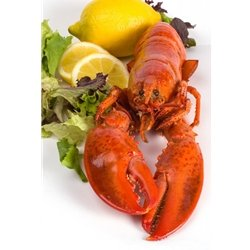 1 and 1/8 lb Live Maine Lobster -- Pack of 2
