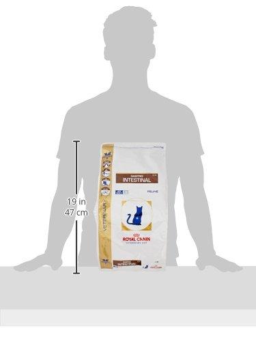 ROYAL CANIN Alimento para Gatos Gastro Intestinal GI32-4 kg: Amazon.es: Productos para mascotas