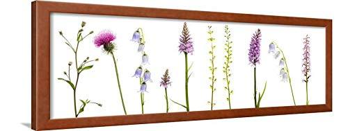 ArtEdge Meadow Flowers, Fleabane Thistle, Bearded Bellfower, Common Spotted Orchid, Twayblade, Austria Wall Art Framed Print, 12x36, Brown ()