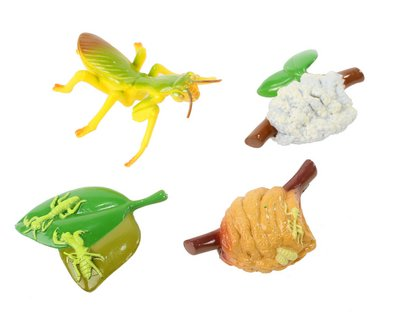 INSECT LORE MANTIS LIFE CYCLE STAGES (Set of 6)