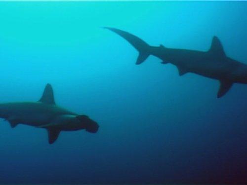 Ocean Mysteries - Tagging - Corwin Will