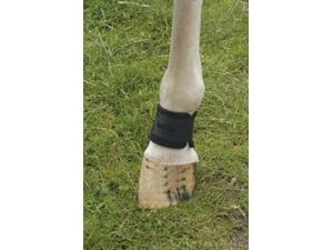 Pastern Wraps (KITT Pastern Wraps - one size - black - plush velcro-receptive outer for total adjustablility)
