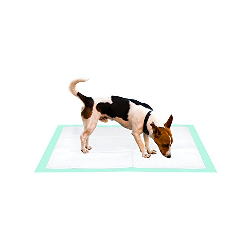 Review Thxpet Puppy Pads Super