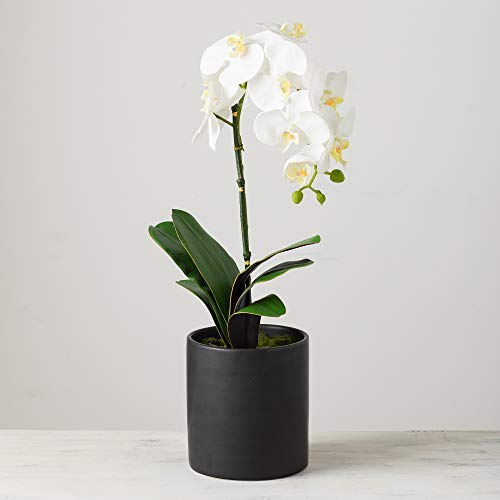 Sullivans White Phalaenopsis Orchid in Sleek Black Base, 22 Inches High - Phalaenopsis White Orchid