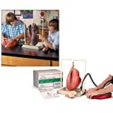 Nasco BioQuest Inflatable Lungs Comparison Kit - Dissection & Science Education Materials - LS03768