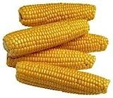 The Dirty Gardener Kandy King Korn Corn - 5 Pounds