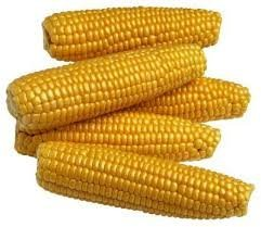 The Dirty Gardener Kandy King Korn Corn - 5 Pounds by The Dirty Gardener (Image #1)