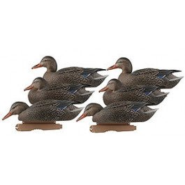 Avery Hunting Gear PG Mallards-Early Season Hen Pack (1/2 Dozen)