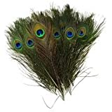 Mor Pankh 5 Pcs / Morpankh / Natural Peacock Feathers / Natural Beautiful Peacock Eye Feathers Tails (Set of 5 Pieces)