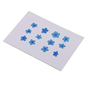 Fityle 12 Pieces Real Dried Flower Forget-me-not for DIY Resin Casting Ornament Candle Making Decoration Blue White 35