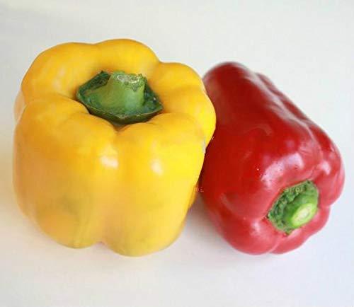 Shopmeeko EnvÃo gratis 100 unids Plantas de pimiento picante Plantas vegetales orgánicas deliciosas y