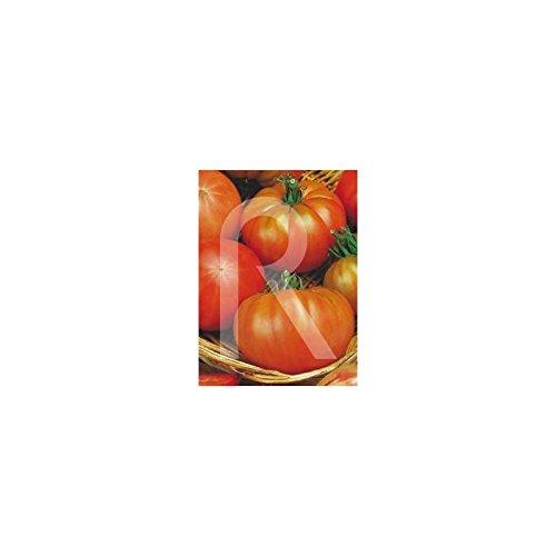 Rocalba - Semilla de tomate de muchamiel: Amazon.es: Jardín