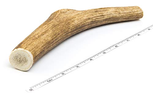 Premium Elk Antlers for Dogs | Antler Dog Chew Elk Bone For Large Dogs | Healthy & Long Lasting Treat For Aggressive Chewers | Wild Sourced in the USA - Veteran Owned (Whole, Large 7