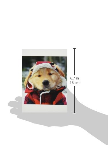 Nouvelles Images Holiday Boxed Note Card Set, Golden Retriever Greetings (XDB 451) Photo #2
