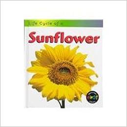Paginas Para Descargar Libros Sunflower (life Cycle Of A (hfl)) Archivo PDF A PDF
