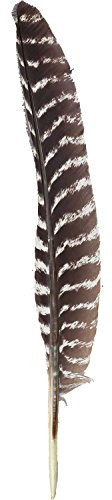 ZUCKER™ Barred Turkey Pointer Feathers Left Wing - 10-16 - Natural