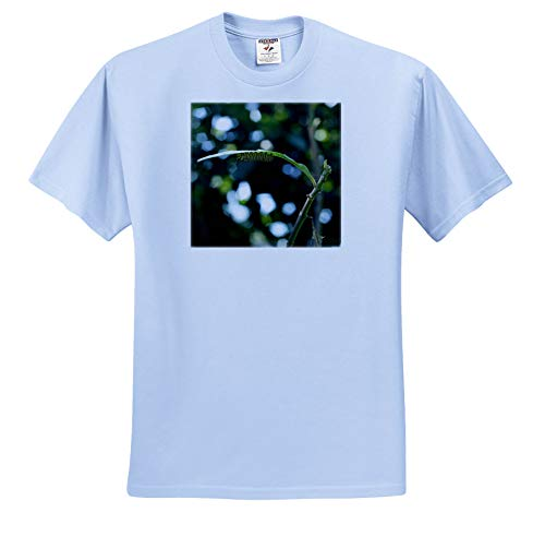 Stamp City - Insects - Photo of a Monarch Caterpillar on a Milkweed Leaf Looking to Chrysalis - T-Shirts - Light Blue Infant Lap-Shoulder Tee (6M) (ts_302842_74)