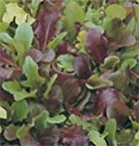 Lettuce Wildfire Mix D2850 (Multi Color) 500 Seeds by David's Garden Seeds