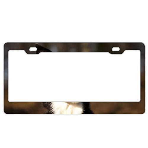 (KSLIDS Decor Car Vehicle License Plate Souvenir Metal Sign Plaque Dog Spotted Ears Muzzle Surprise)