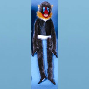 Sunny toys G964 38 In. Mandrill Wrap-Around Puppet