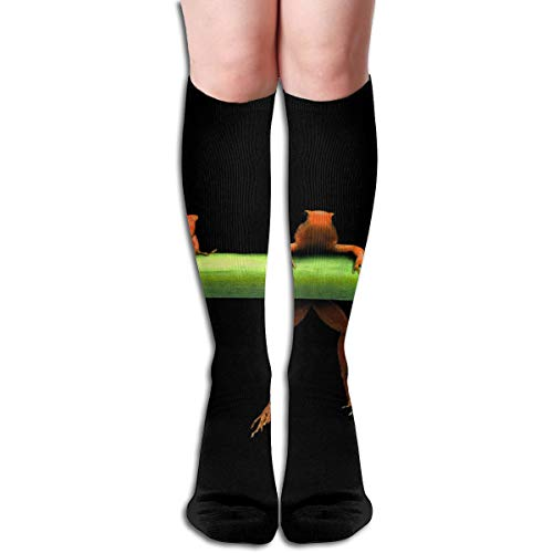 19.68 Inch Compression Socks Hanging Frogs Animal High Boots Stockings Long Hose for Yoga Walking for Women Man
