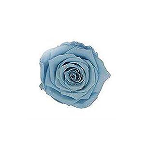 shine-hearty 4-5cm Preserved Rose Flower DIY Rose Bear Immortal Rose Gift Box Gift Preserved Fresh Flower,Light Blue 45