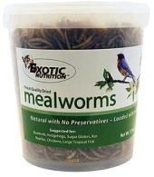 Mealworm Tub - 5