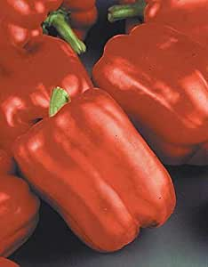 Pepper Red Beauty 250 seeds