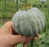 Chillhawaiian Brand China White Papaver Somniferum Poppy Seeds - High alkaloid - 2,500 seeds