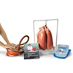 Nasco BioQuest Inflatable Lungs Kit - Dissection & Science Education Materials - (Inflatable Lungs Kit)