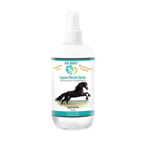 Thrush Buster - Big Mare Equine Thrush Spray : Antibacterial/Antifungal. Clinically Proven Effective On Thrush. No Sting, No Stain Formulation. Veterinary Approved & Recommended.