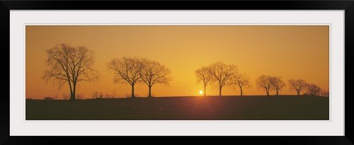 """GreatBIGCanvas """"Hackberry Trees Maytown PA"""" Photographic Print with Black Frame, 48"""" x 15"""""""