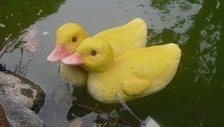 Wonderland Plastic Floating Ducks for Decor, 7.1x5.6x4.5 Inches (Yellow)