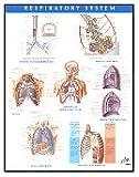 Respiratory System Chart, Netter, Frank H., 1929007299