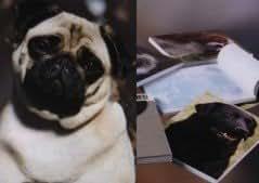Perro de estilo libreta magnética para la nevera
