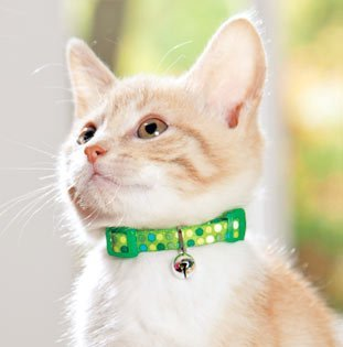 (Adjustable Safety Collar Color: Green)