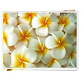 Relax Spa Shop @ Floating Candles,Aromatherapy Relax (Set of 10 Frangipani Handmade Candles)