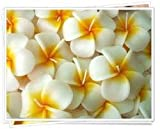 Relax Spa Shop @ Floating Candles ,Aromatherapy Relax (Set of 10 Frangipani Handmade Candles)