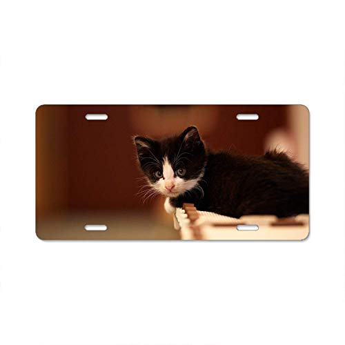 (Fabri.YWL Abstract Kitten Baby Spotted License Plate Frame Car Licence Plate Covers Auto Tag Holder 6