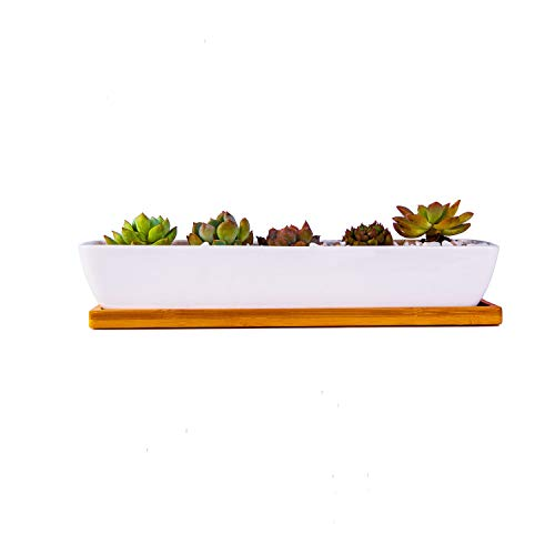 Opsuper 11 Inch Ceramic Rectangle Succulent Planter with Bamboo Saucer, White Modern Indoor Cactus/Flower Plant Pot with Drainage, Decoration for Desks/Bookshelves/Window Sills/Living Room (C)