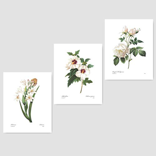 (Set of 3) White Botanical Art (Redoute Flower Prints, Room Wall Decor) Tuberose, Rose of Sharon, Hibiscus - Unframed (Hibiscus Premium Antique Womens)