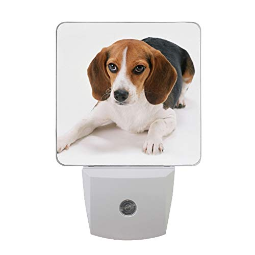 Auto ON/Off Plug in LED Night Light with Dusk to Dawn Sensor Beagle for Kids Adults