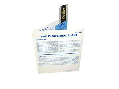 (American Educational Microslide The Flowering Plant Lesson Set)