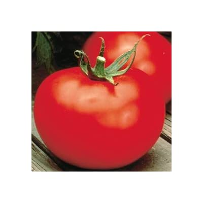 "Better Boy Tomato Plant– Two (2) Live Plants – Not Seeds –Each 5"" to 7"" Tall- in 3.5 Inch Pots : Garden & Outdoor"