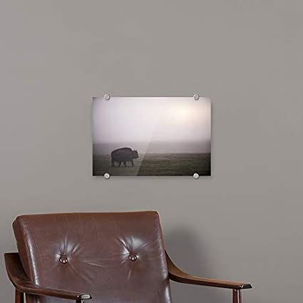 36x24 Circle CaptureBison in Field of Mist Premium Acrylic Sign CGSignLab