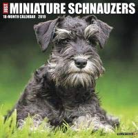 Quality 2019 JUST Miniature Schnauzers Calendar with Free Rock Music MEMOROBILIA (Key Chain, Pen,Magnet,Card ETC.) Calendar Planner,Calendar Wall,Pocket, Monthly,DO IT All,Gallery Edition